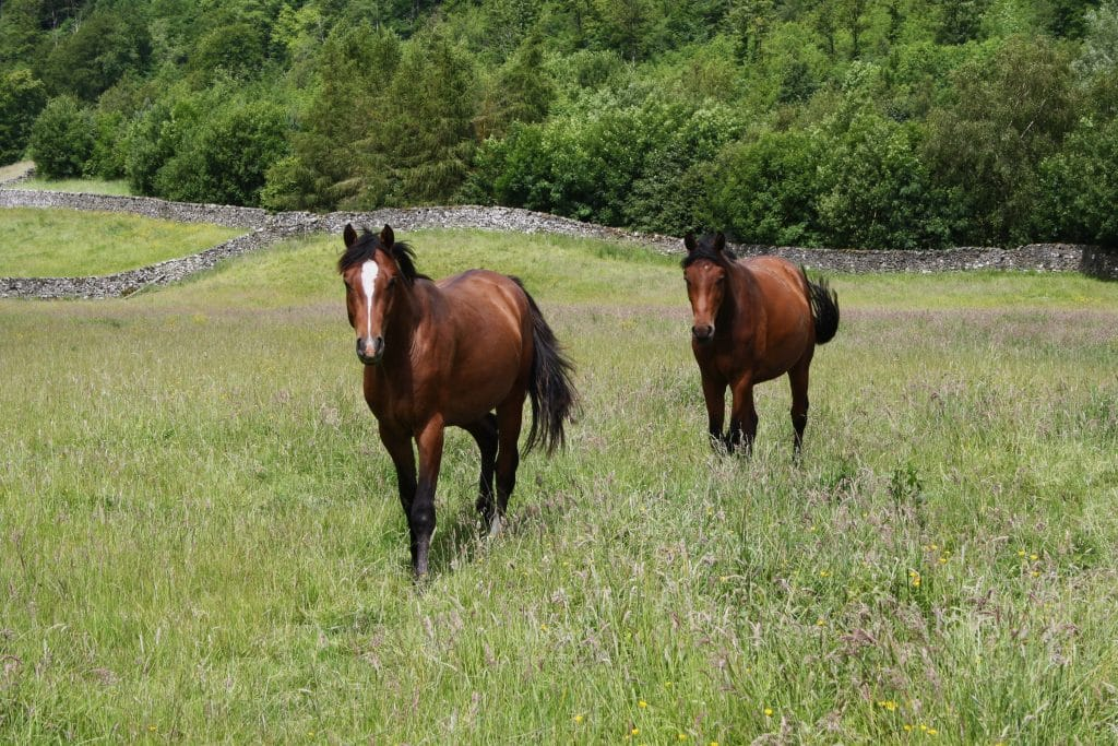 Ulcer Supplements for horses - Synovium Horse Health