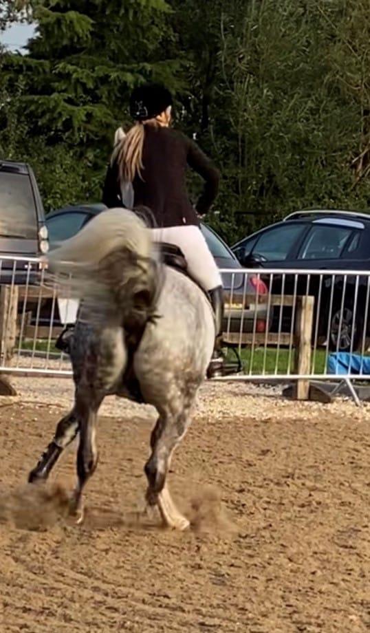 horse calmers for a spooky horse