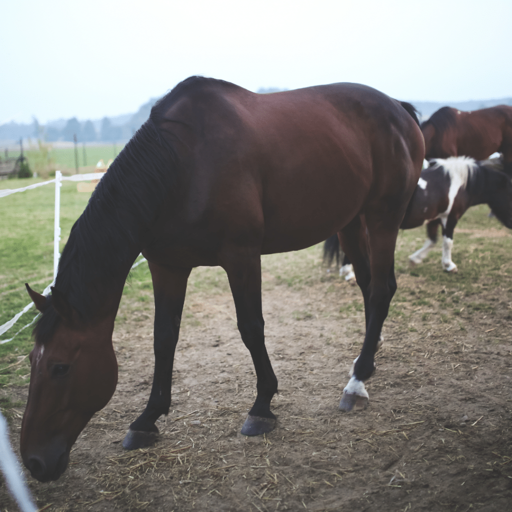 Vitamin and Mineral deficiencies in horses - Synovium Horse Health