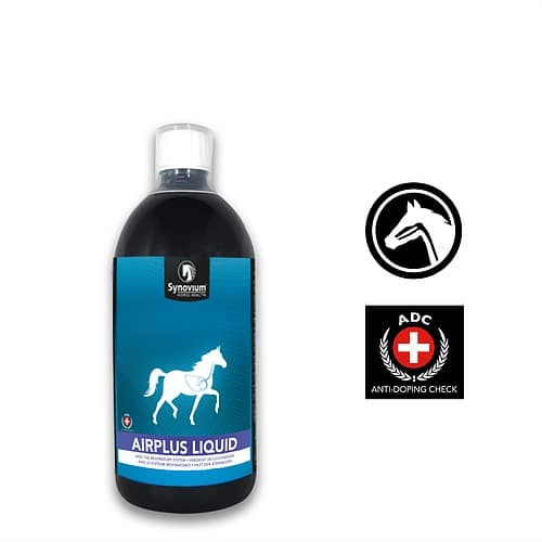 How to keep our horses happy and comfortable when they are stabled in Winter - Synovium Horse Health