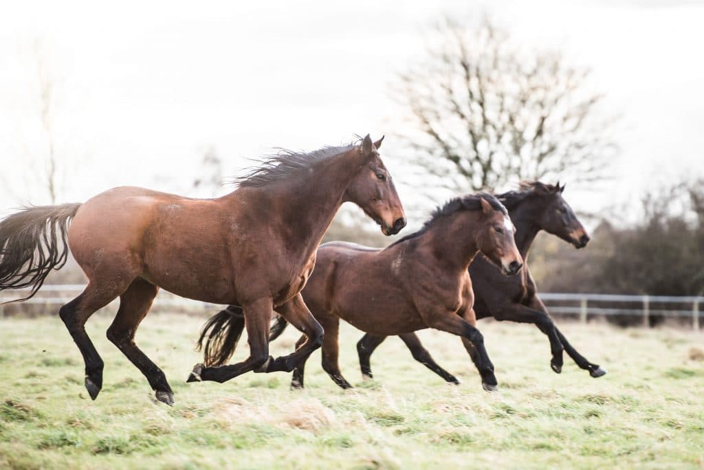 Dealing with Arthritis in Horses - Synovium Horse Health
