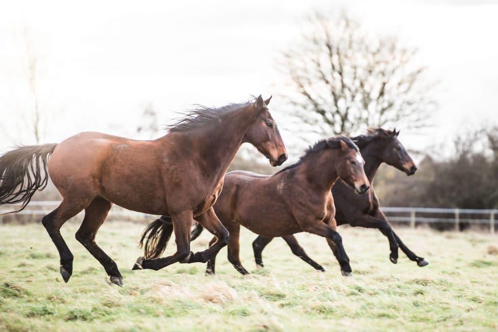 Dealing with Arthritis in Horses - Synovium Horse Health