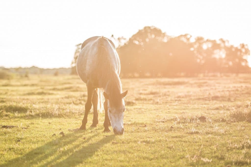 The benefits of giving your horse a break - Synovium Horse Health
